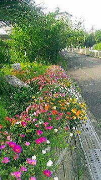 h307月の花壇全体.jpg